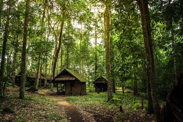 Stara drewniana chałupa w lesie Premium Zdjęcia