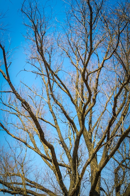 Stare Wielkie Gałęzie Drzewa Na Jasnym Tle Błękitnego Nieba. Premium Zdjęcia