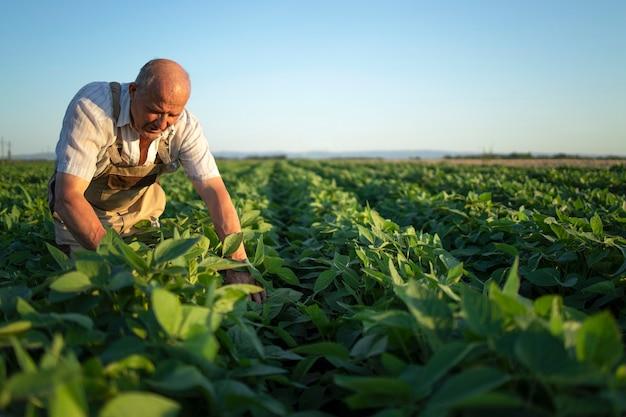Starszy Pracowity Rolnik Agronom W Polu Soi Sprawdzanie Upraw Przed Zbiorami Darmowe Zdjęcia