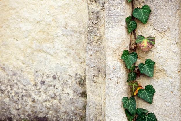 Stary Cmentarz żydowski Z Symbolami Religijnymi. Premium Zdjęcia