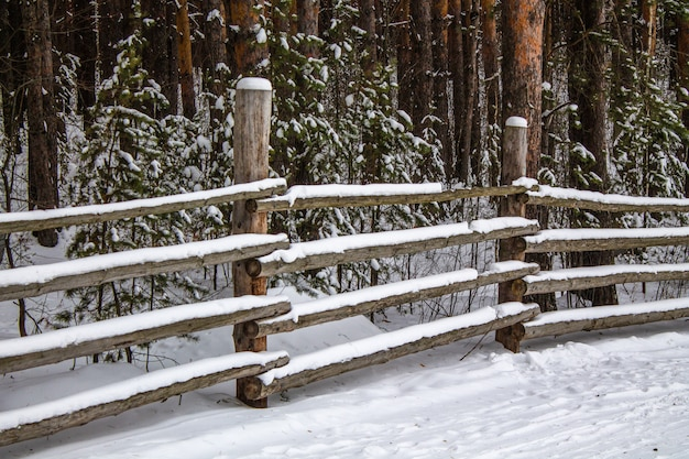 Stary Drewniany Płot I Gęsty Sosnowy Las W Zimie Premium Zdjęcia