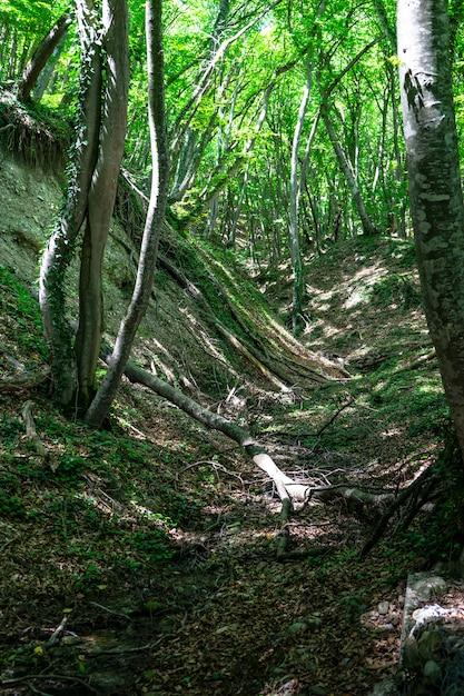 Stary Las W Okolicy Zedazeni Premium Zdjęcia