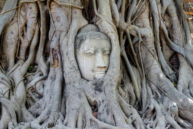Status Głowy Budda W Korzeniach Drzew W Tajlandii Premium Zdjęcia