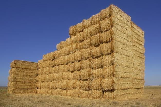 stodola-zboz-z-kwadratowym-ksztaltem-sto