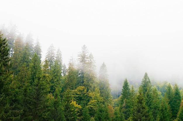 Stoki górskie, las, wzgórza, poranna mgła Premium Zdjęcia