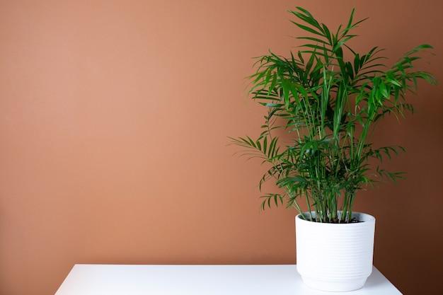 Streszczenie Nowoczesne Wnętrze Z Zieloną Rośliną Na Stole, Ciemnopomarańczowe Tło ściany Kopia Widok Z Boku Przestrzeni Premium Zdjęcia