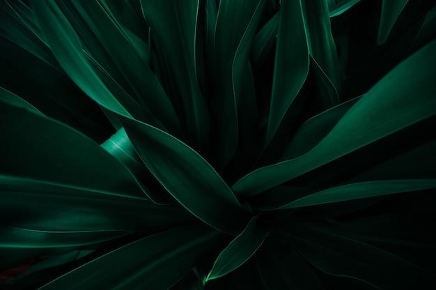 Streszczenie Tekstura Liścia Premium Zdjęcia