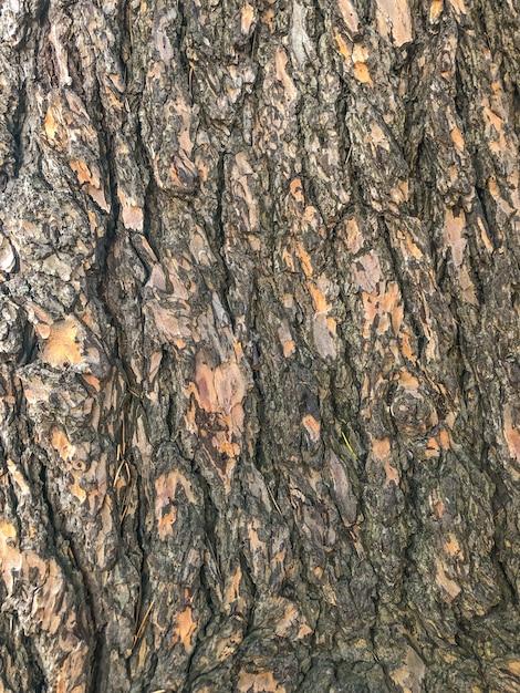 Struktura drewna, drewno w soczi zwiększyło widoczność kory. Premium Zdjęcia