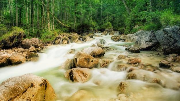 Strumień Ze Skałami W Lesie Darmowe Zdjęcia