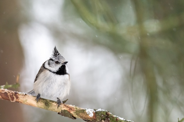 Strzał Zbliżenie Bewicks Strzyżyk Siedzący Na Drzewie Darmowe Zdjęcia
