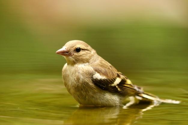 Strzał Zbliżenie ładny Ptak Wróbel Darmowe Zdjęcia