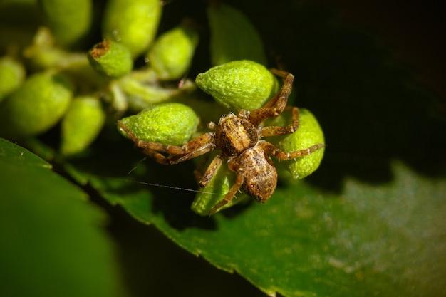Strzał Zbliżenie Pająka Na Zielonych Liściach Rośliny Darmowe Zdjęcia