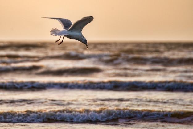 Strzał Zbliżenie Piękna Biała Mewa Ze Skrzydłami Spred Latające Nad Oceanem Darmowe Zdjęcia
