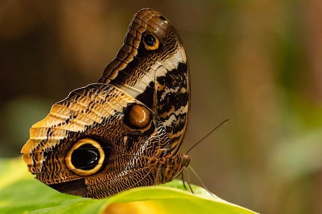 Strzał Zbliżenie Pięknego Motyla Darmowe Zdjęcia