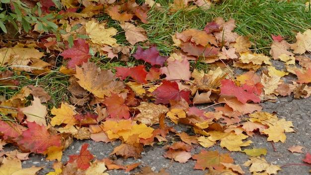 Strzał Zbliżenie Pięknych Kolorowych Opadłych Liści Jesienią Na Ziemi Darmowe Zdjęcia