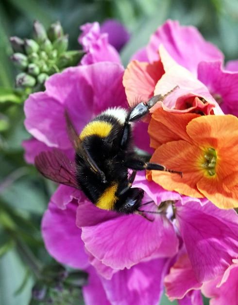 Strzał Zbliżenie Pszczoły Siedzącej Na Kwiatku Darmowe Zdjęcia