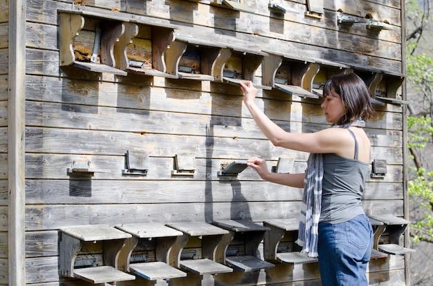 Strzał Zbliżenie Samicy Kontrolującej Jej Dom Pszczelarski Darmowe Zdjęcia