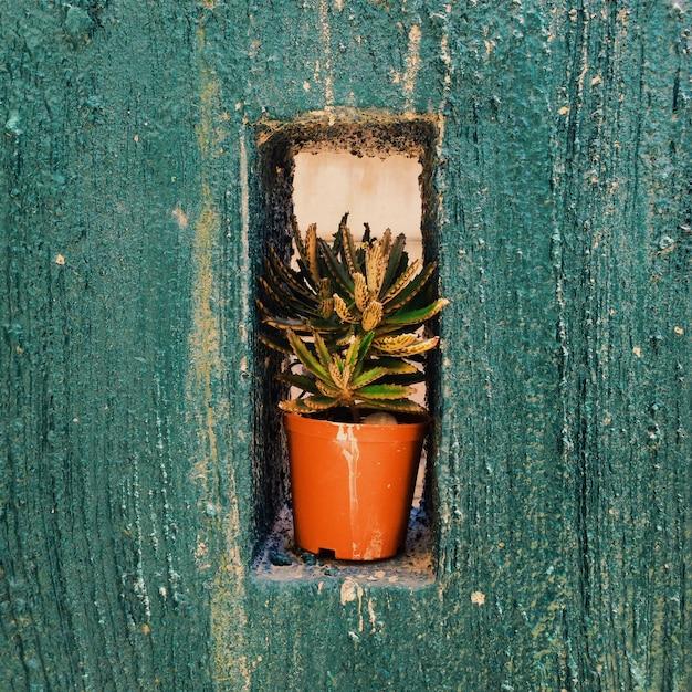 Strzał Zbliżenie Zielonej Rośliny W Doniczce Na Otworze W Niebieskim ścianie Betonowej Darmowe Zdjęcia