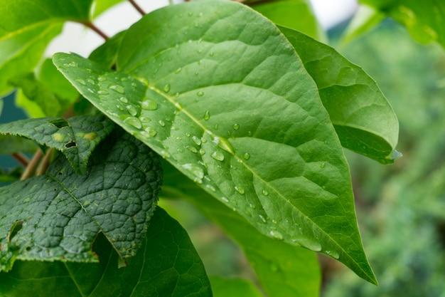 Strzał Zbliżenie Zielonych Liści Pokryte Rosą Darmowe Zdjęcia
