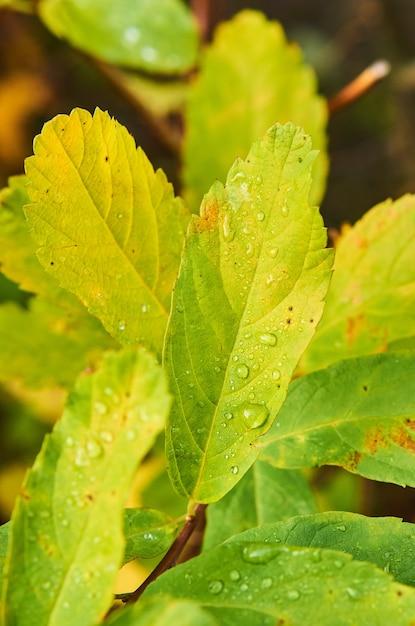 Strzał Zbliżenie Zielonych Roślin Pokryte Rosą Darmowe Zdjęcia