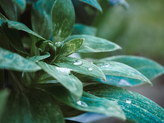 Strzał Zbliżenie Zielonych Roślin Z Waterdrops Na Liściach W Parku Darmowe Zdjęcia