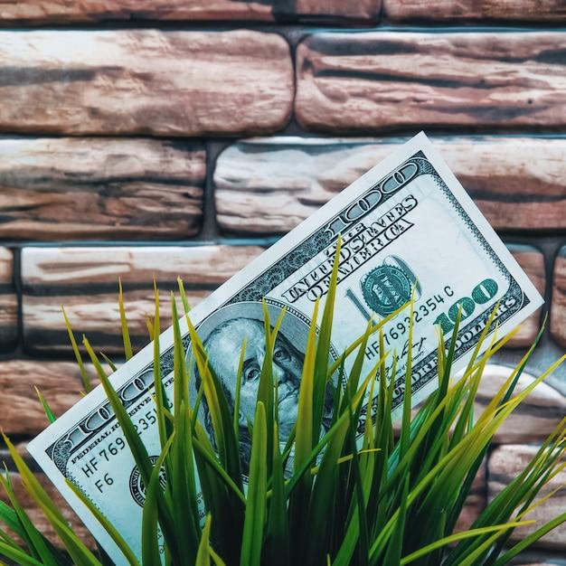 Stu Dolarowy Banknot Na Trawie. Zbliżenie, Na ścianę Z Cegły W Kolorze Ciemnoczerwonego Brązu. Premium Zdjęcia