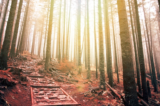 Suche Drzewa Na Zachodzie Słońca Darmowe Zdjęcia