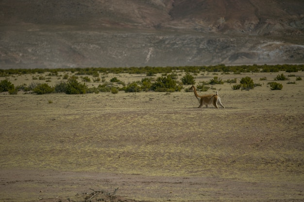 Suche Krajobrazy W Cordillera Real, Andach, Boliwii Premium Zdjęcia