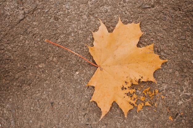 Suchy liść Darmowe Zdjęcia