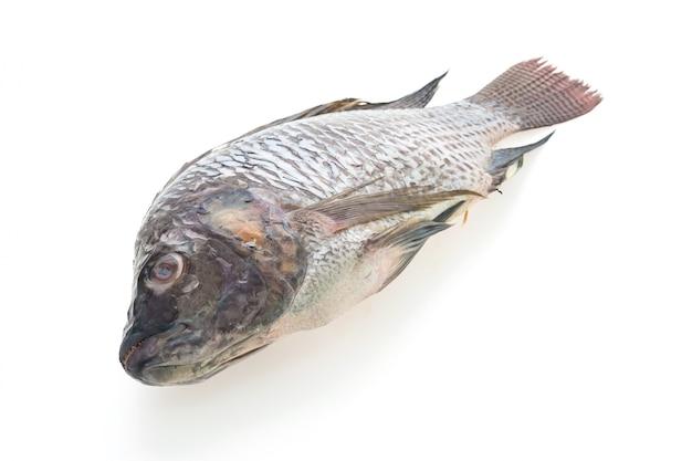 Surowe świeże ryby Darmowe Zdjęcia