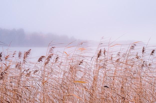 Suszone rośliny na brzegu jeziora Premium Zdjęcia