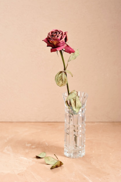 Suszy wysuszoną różę w wazonie na kremowym tle Premium Zdjęcia