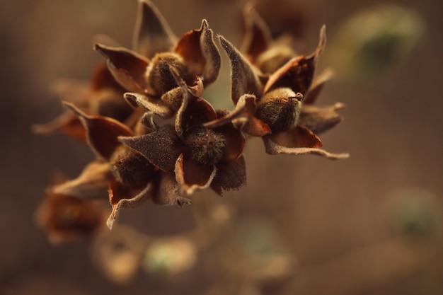 Suszy Ziarna Wiecznozieloni Drzewa Z Zamazanym Tłem Darmowe Zdjęcia