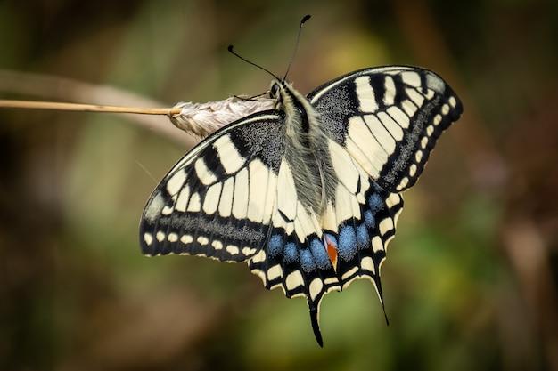 Swallowtail Motyl Na Zewnątrz Darmowe Zdjęcia