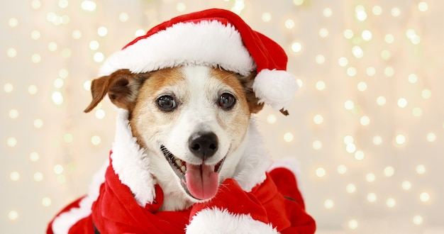 Świąteczny Pies Jako Mikołaj Premium Zdjęcia