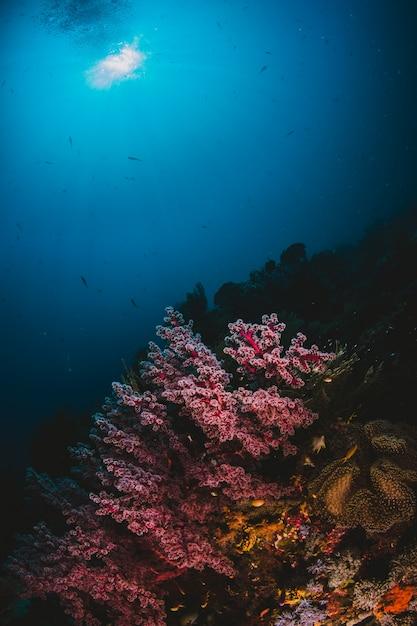 Światło słoneczne i koralowce Darmowe Zdjęcia