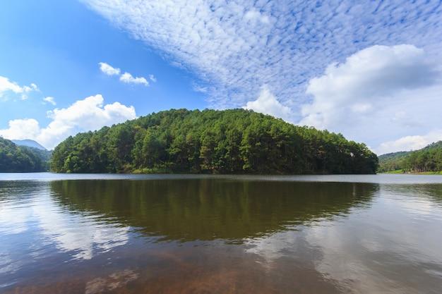 Światło słoneczne przy ssanie w żołądku, sosnowy lasu park, mae hong syn, północ tajlandia Premium Zdjęcia