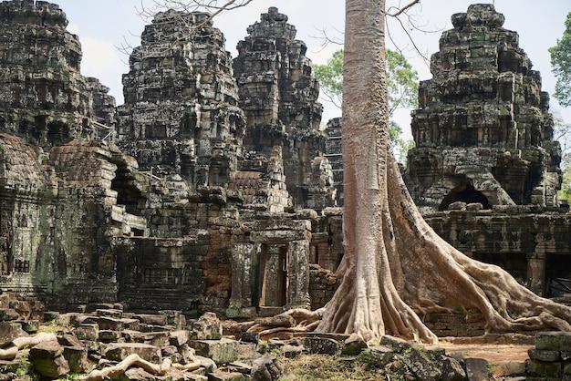 Świątynia angkor wat i drzewa Darmowe Zdjęcia
