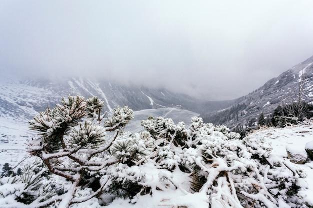 Świerkowy drzewo na halnym wzgórzu zakrywającym z śniegiem Darmowe Zdjęcia