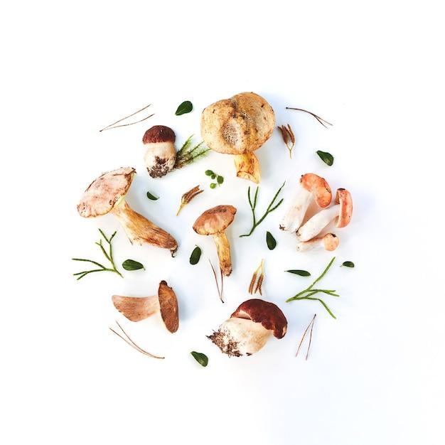 Świeże Grzyby Leśne Na Białym Tle Premium Zdjęcia