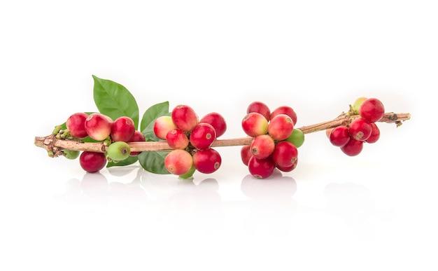 Świeże kawowe fasole z liściem na białym tle Premium Zdjęcia