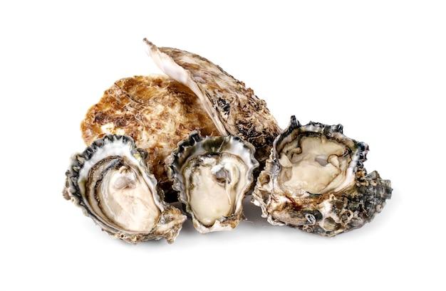 Świeże Ostrygi Na Białym Tle Premium Zdjęcia
