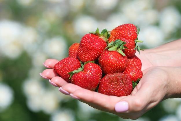 Świeże truskawki Premium Zdjęcia