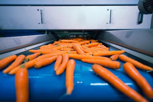 Świeże Warzywa Na Przenośniku Taśmowym Transportowane W Zakładzie Przetwórstwa Spożywczego I Dobierane Pod Względem Wielkości Darmowe Zdjęcia