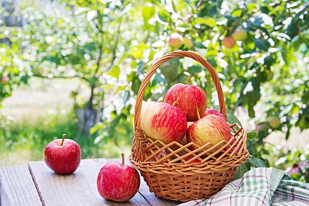 Świezi Czerwoni Jabłka W Koszu Na Stole W Lato Ogródzie Darmowe Zdjęcia