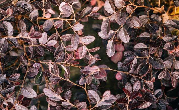 Świeżość Liście Ornamentacyjna Roślina Jako Natury Tło Darmowe Zdjęcia