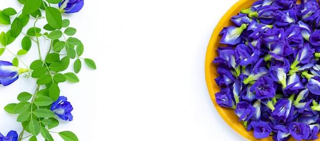 Świeży Motyl Grochu Kwiat Lub Grochu Na Białym Tle. Skopiuj Miejsce Premium Zdjęcia