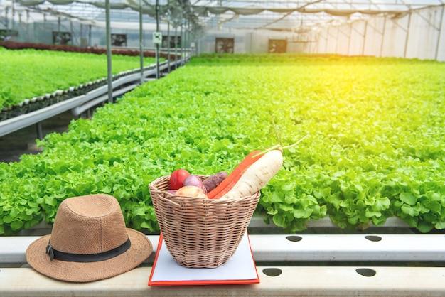 Świeży życiorys w drewnianym koszu z kapeluszem właściciela w szklarnianym ekologicznym gospodarstwie rolnym z zielonym wykładowym pepiniery gospodarstwem rolnym w tle. Premium Zdjęcia