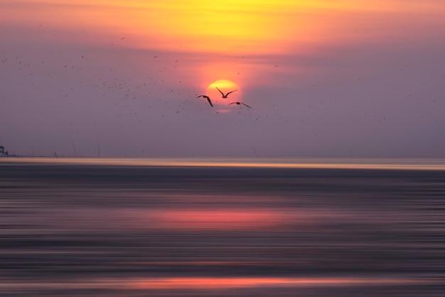 Sylwetka Wielkich Tabunowych Seagulls Lata W Niebie. Premium Zdjęcia
