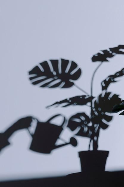Sylwetka Wnętrza Rośliny Na ścianie Darmowe Zdjęcia